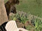 你見過嗎? 聖路易郡發現黑熊蹤影