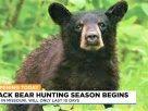 密蘇里州展開有史以來第一季10天受監管獵熊季節